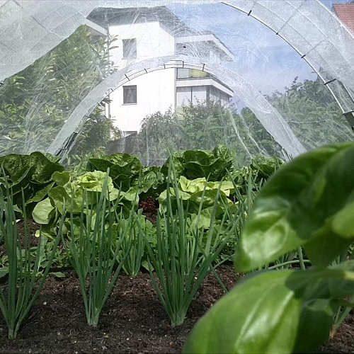 Insektenschutznetz Hochbeet Innenansicht