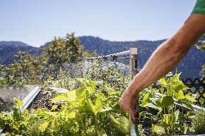 hochbeet bewässerung