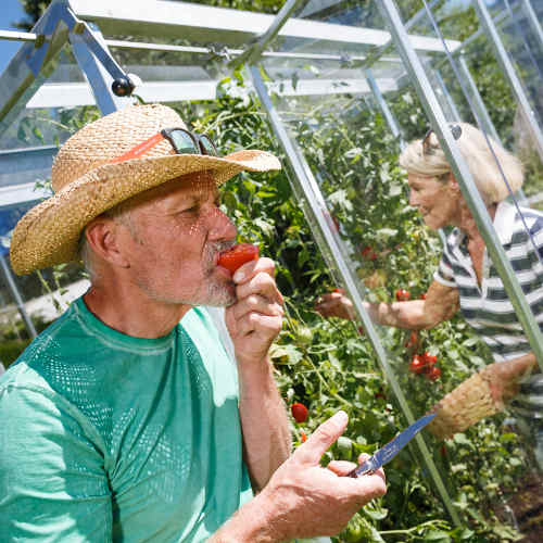 tomatenhaus julia